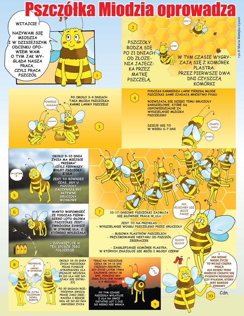 Pszczółka Miodzia oprowadza