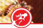 Matki pszczele, pakiety i odkłady