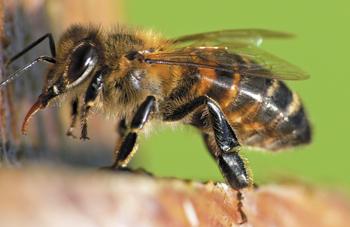 O Pszczołach Trochę Inaczej