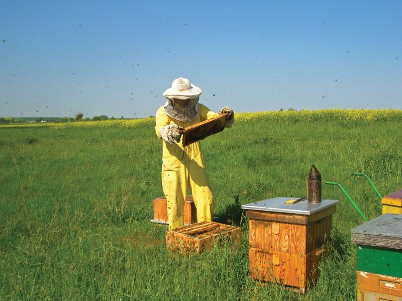 При злобных пчелах такая космическая одежда необходима. Однако сегодня отбор пчел осуществляется щадящим образом, что улучшает не только комфорт работы, но и дает возможность использовать такую одежду.