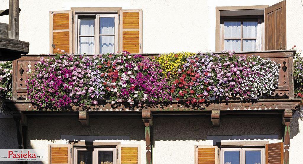 Rosliny Miododajne Na Balkony I Tarasy Cz 1 Pasieka24 Portal Dla Pszczelarzy Z Pasja