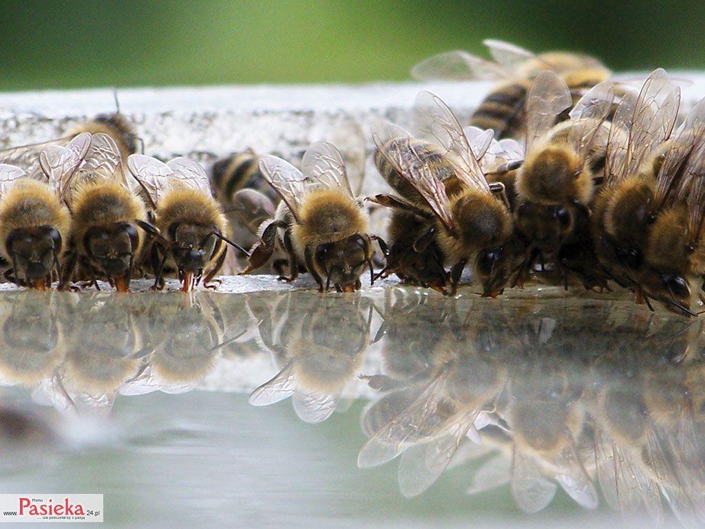 Image result for poidła dla pszczół