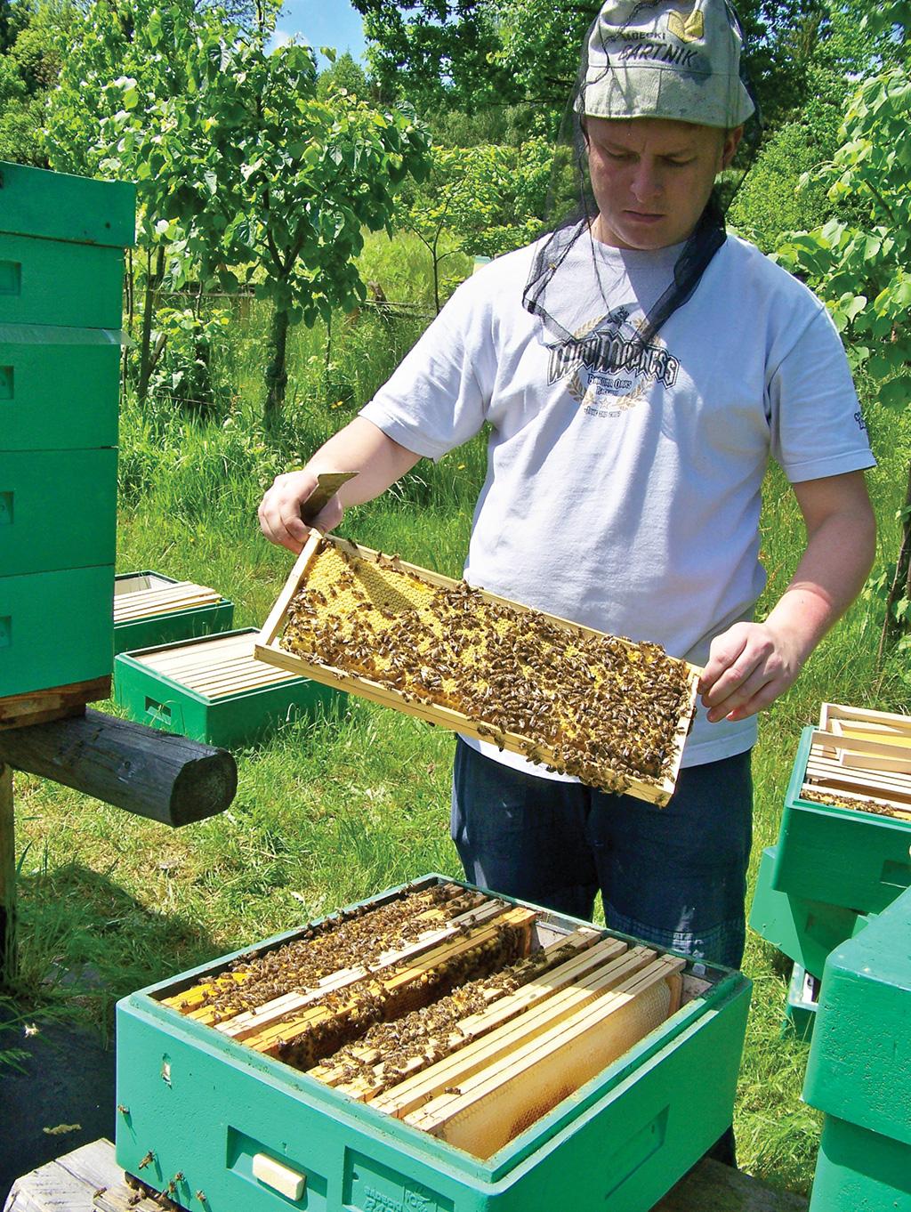 Pszczoly Skad Je Wziac I Jakie Trzeba Poniesc Koszty Pasieka24 Portal Dla Pszczelarzy Z Pasja